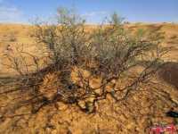 tunisia_deserto_2013_mar-173